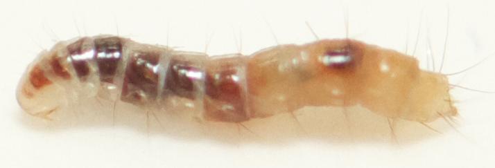 Fleas Control_02