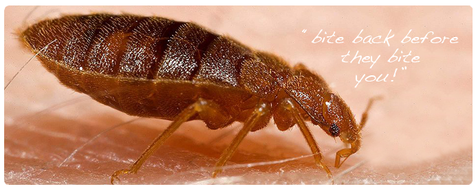 bed-bugs-pest-control-services_23