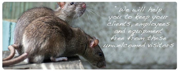 commercial-rodent-pest-control-services_13