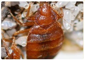 Bed Bug Pest Control Sydney Reviews