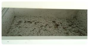 Ant-Control1