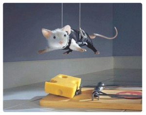 Rodent-Control-Sydney-Rat-Control-Rodent-Control_17-300x236