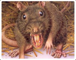 Rodent-Control-Sydney-Rat-Control-Rodent-Control_18-300x236