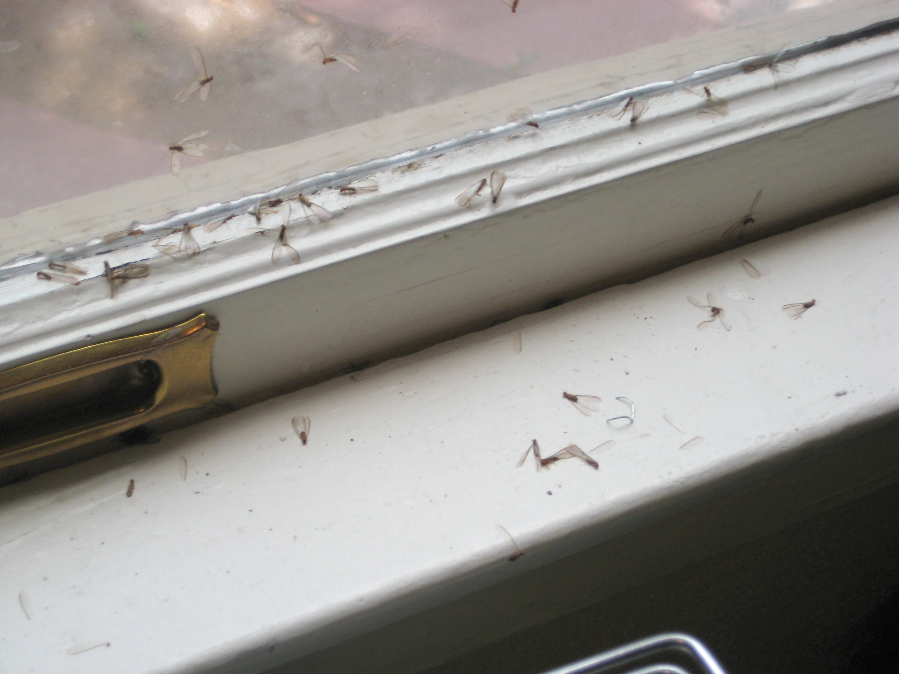 Termites Control Sydney Detection Safe Eradication And