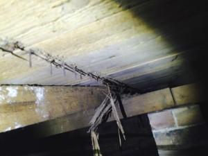 Termtie Control Termite Damage_01