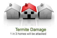 Termtie Control Termite Damage_02