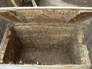 Termtie Control Termite Damage_03